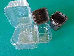 godet et bac plastique pour les semis de tomate