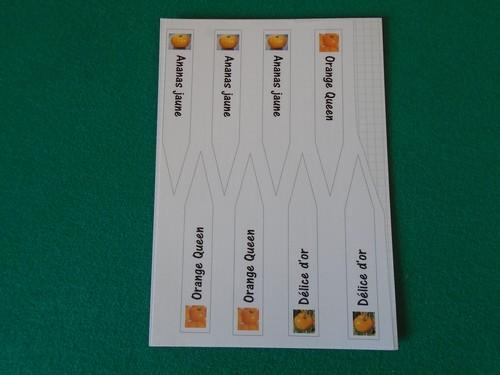 étiquettes à semis collées sur feuille bristol