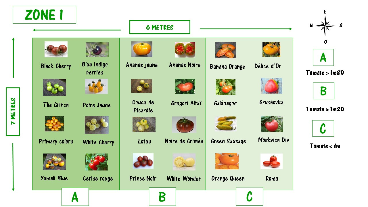 Un plan de jardin pour bien préparer la plantation de vos tomates