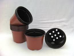 pot de rempotage des plants de tomate