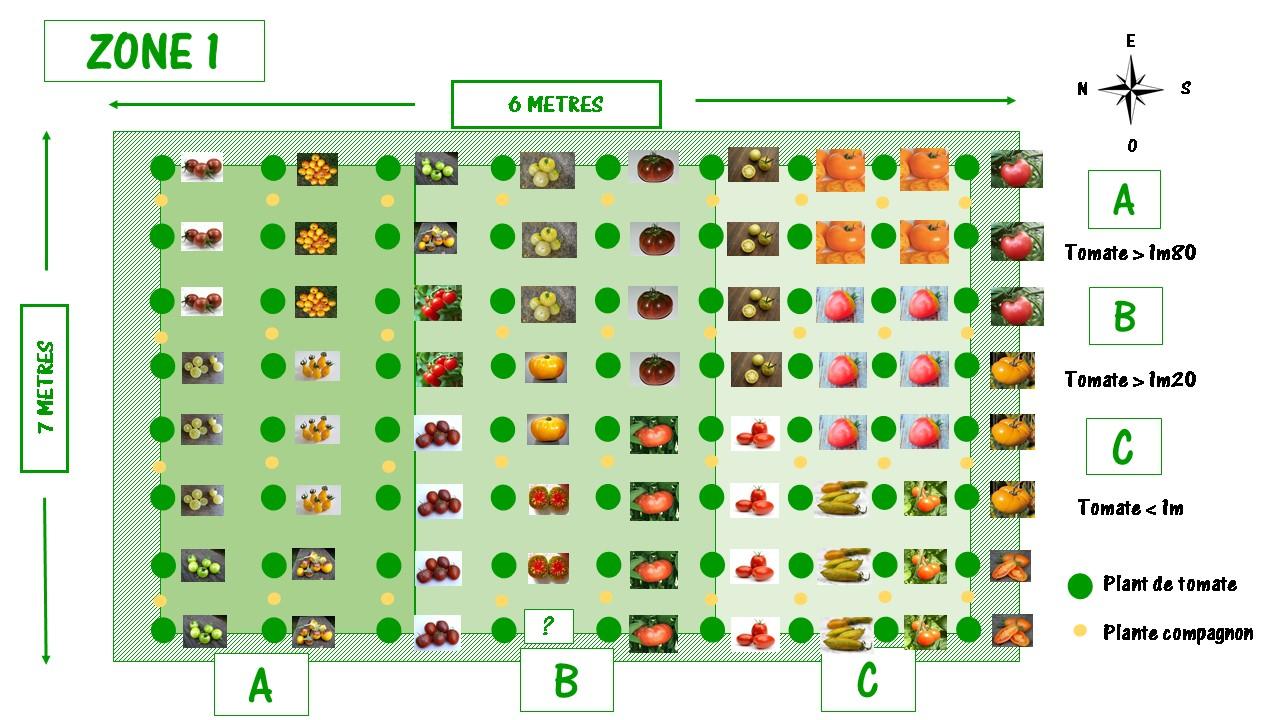 Disposition des variétés