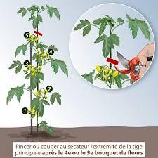 tailler les plants de tomates etêtage