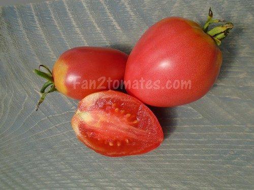 tomate grushovka