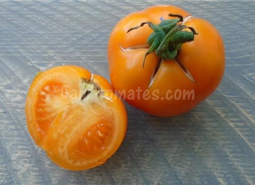tomate orange queen x500