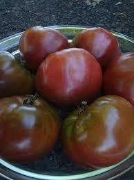 récolte tomate noire de crimée