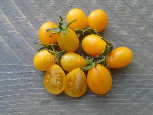 tomate galapagos