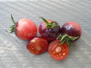 tomate rose cherry foncé