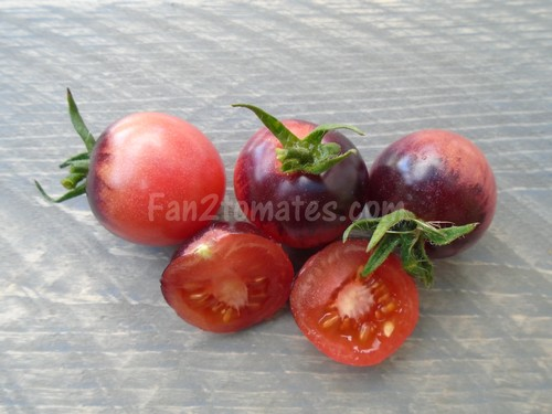 tomate rose chery foncé x500