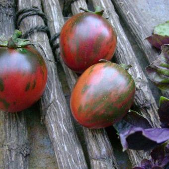 tomate Black Vernissage