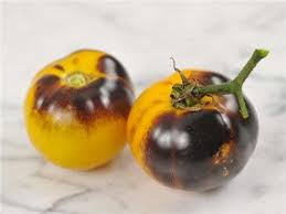 tomate blue gold cherry