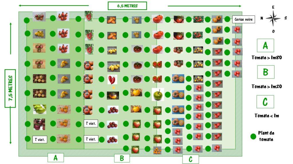 plan de jardin 2019 / planter les tomates