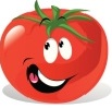 tomate sélectionné pour la mise en terre
