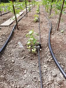 système arrosage plante compagnon 2