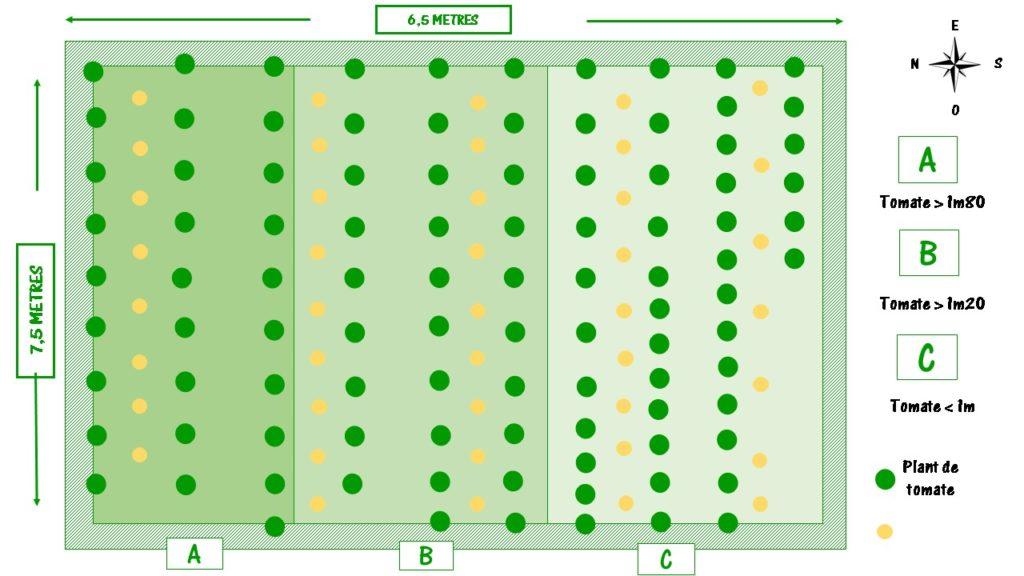 plan de jardin des compagnons pour planter les tomates