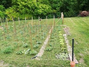 pailler les tomates zone 3