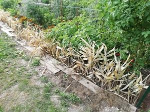 bambou pour protéger le jardin coté sud