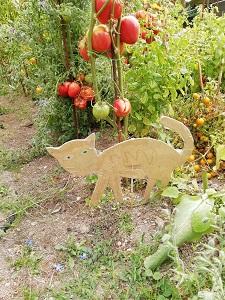 chat dans jardin pour protéger le jardin
