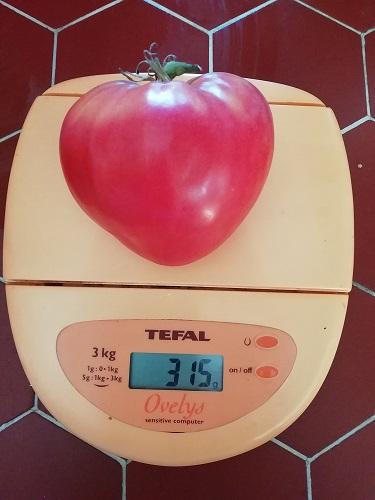 CB poids pour la saison des tomates