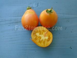 PP pour saison des tomates
