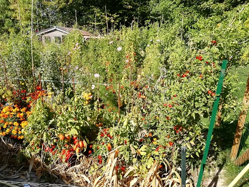jardin 1509