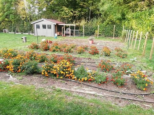 jardin avec SA pour nettoyer le matériel à tomates