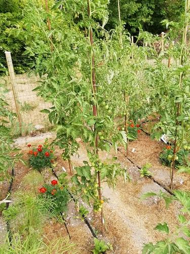 poire rouge 2007