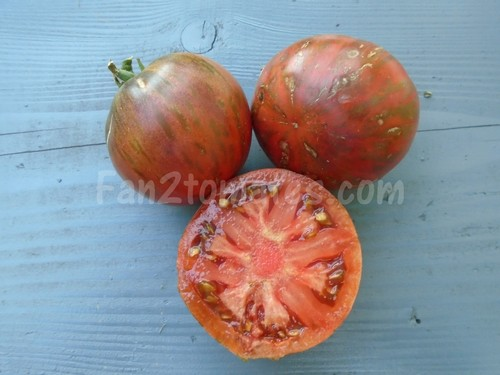 tomate russian cossack