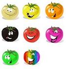 tomates en couleur