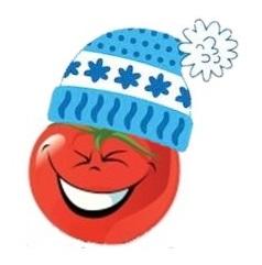 tomates précoces