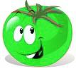 les graines de tomates vertes
