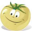 graines de tomates blanches