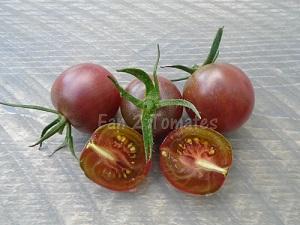 black cherry pour choisir les variétés de tomates