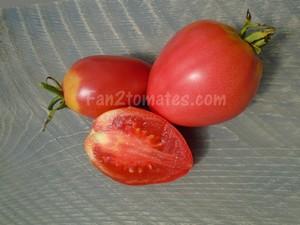 grushovka pour choisir les variétés de tomates