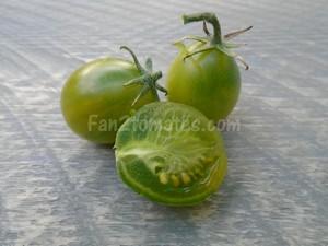 grinch cherry dwarf pour choisir les variétés de tomates