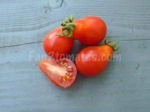 poire rouge pour choisir les variétés de tomates