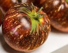 dark galaxy pour choisir les variétés de tomates