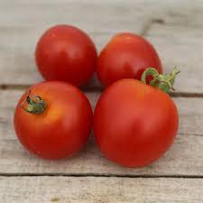 stupice pour choisir les variétés de tomates