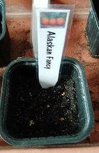 AF semis germés