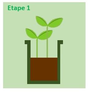 repiquer les semis E1