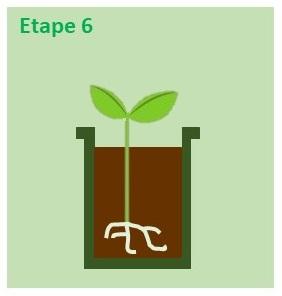 godet avec terreau et semis pour repiquer les semis