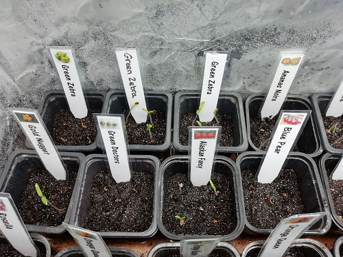 enceinte de croissance pour semis 2 0603 a