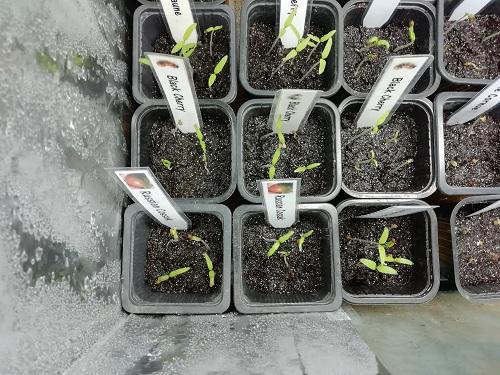 enceinte de croissance pour semis 1 0603 a