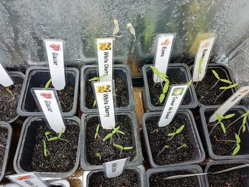 enceinte de croissance pour semis 1 0603 b