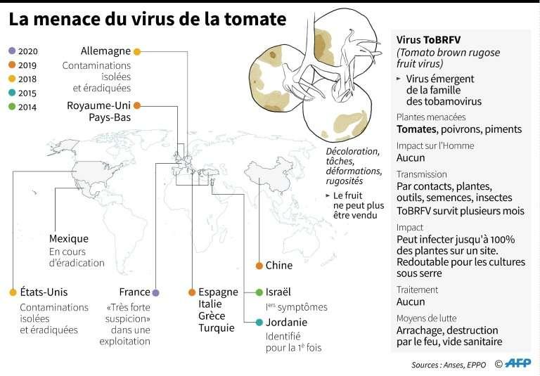 carte du virus de la tomate