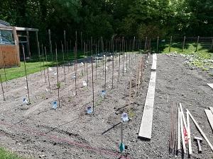 ligne de tomates 6 plantée