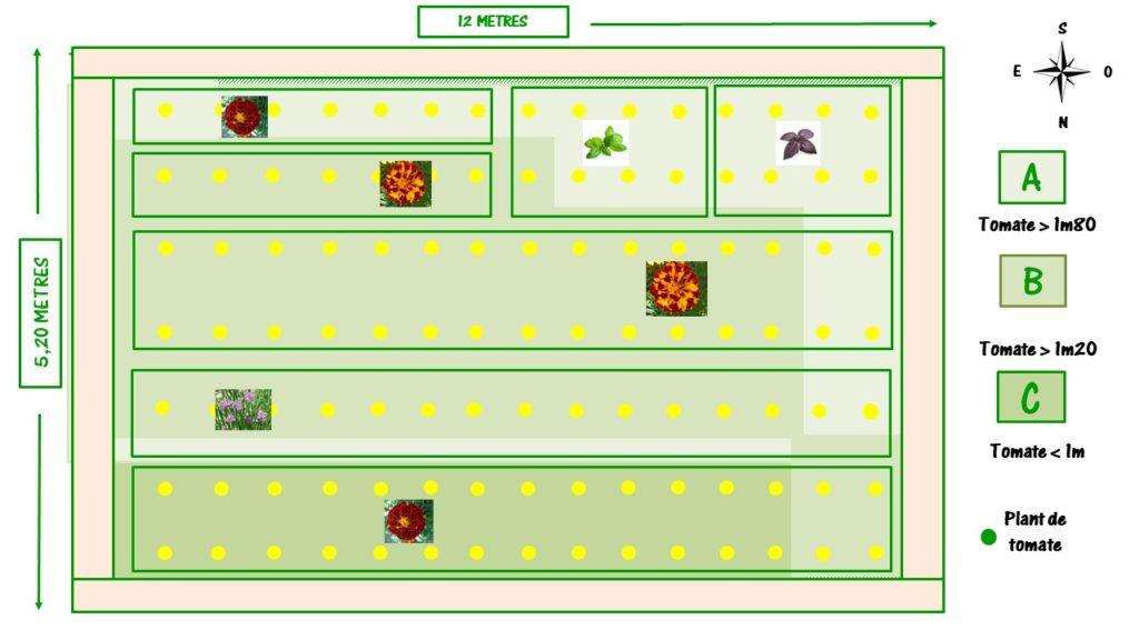 plan pour les plantes compagnon