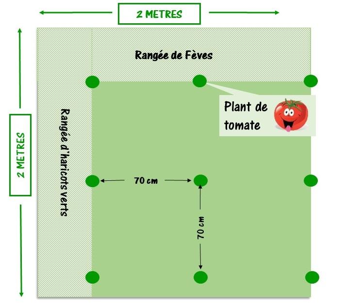 réaliser un plan de jardin avec espacement des plants