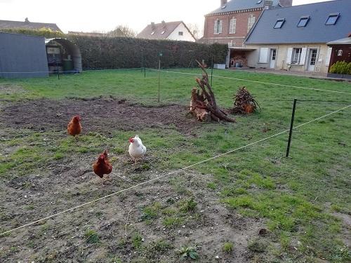 souche retirée pour agrandir le jardin