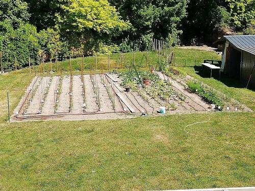 jardin avant d'avoir pailler les plans de tomates