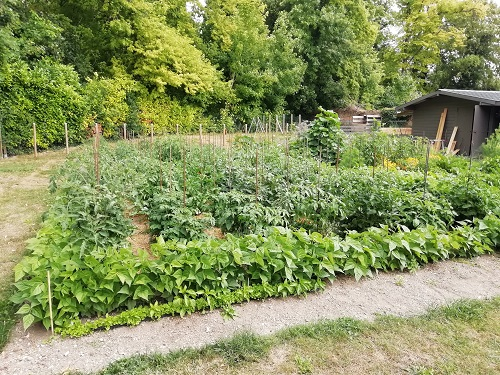 jardin 08072020